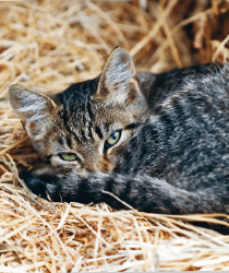 Granngarden_Fraga_veterinaren_315_Katt2